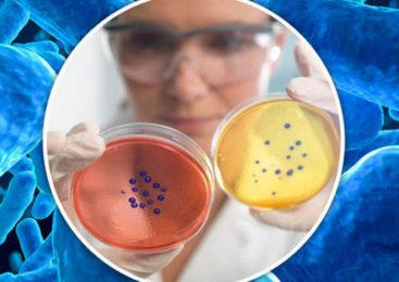 Устойчивость Хеликобактера к антибиотикам. Пути решения. Торонтовский консенсус